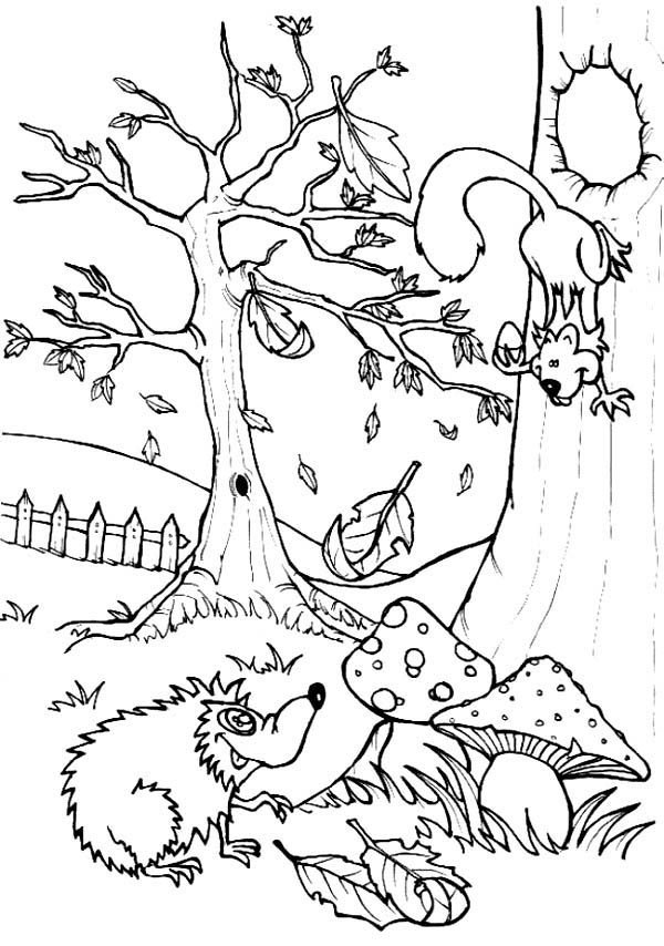 Hedgehogs, : Hedgehog Talking to Squirrel Colouring Pages