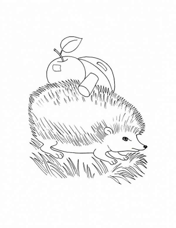 Hedgehogs, : Hedgehog with Apple and Mushroom on His Body Coloring Pages