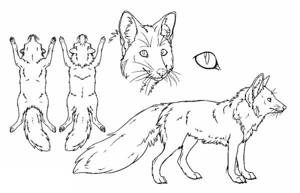 Fox, : How to Draw a Fox Coloring Pages