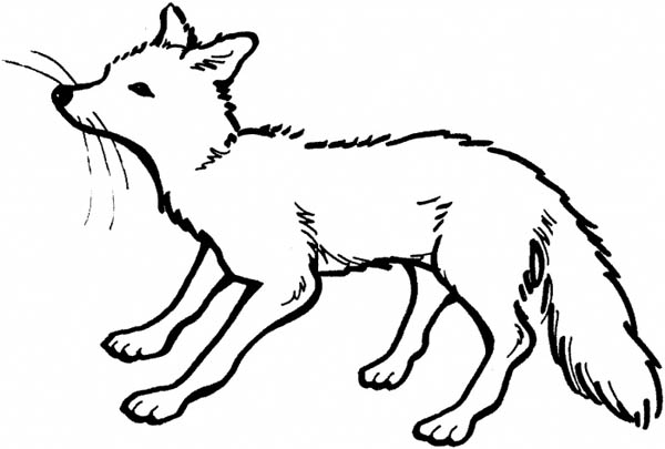 Fox, : Hungry Fox Coloring Pages