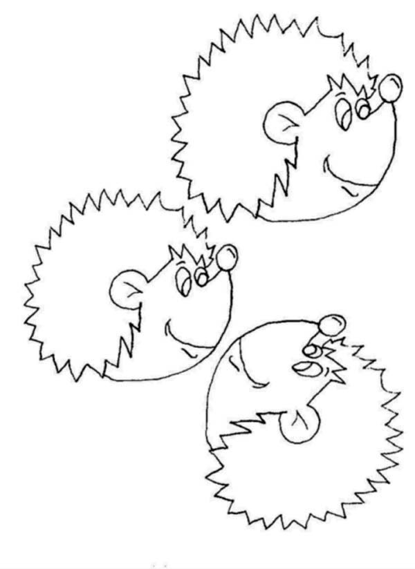 Hedgehogs, : Picture of Hedgehog Head Colouring Pages