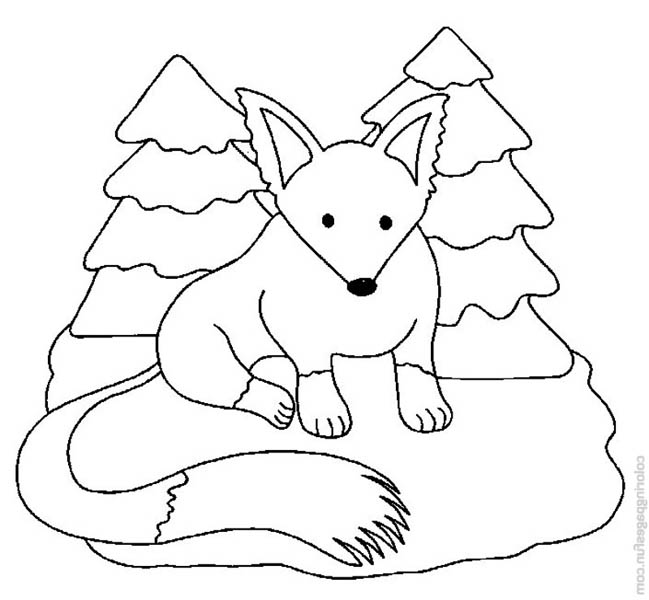 Fox, : Snow Fox Coloring Pages