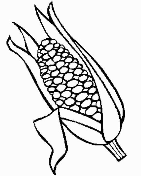 Foods, : Sweet Corn Food Coloring Pages