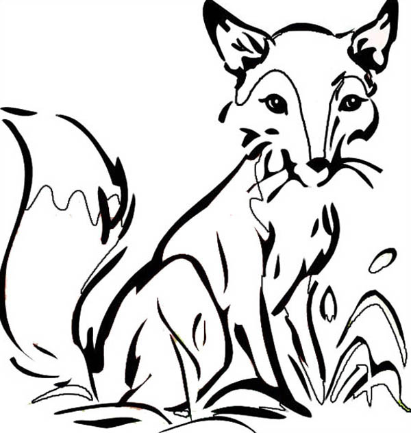 Fox, : Thirsty Fox Drink at Lakeside Coloring Pages 2