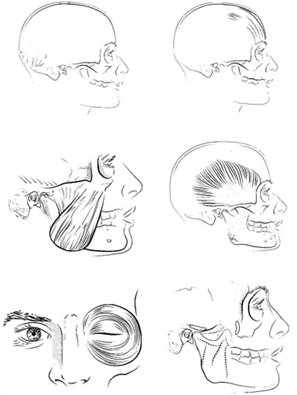 Human Anatomy, : All Human Organs in Head Coloring Pages