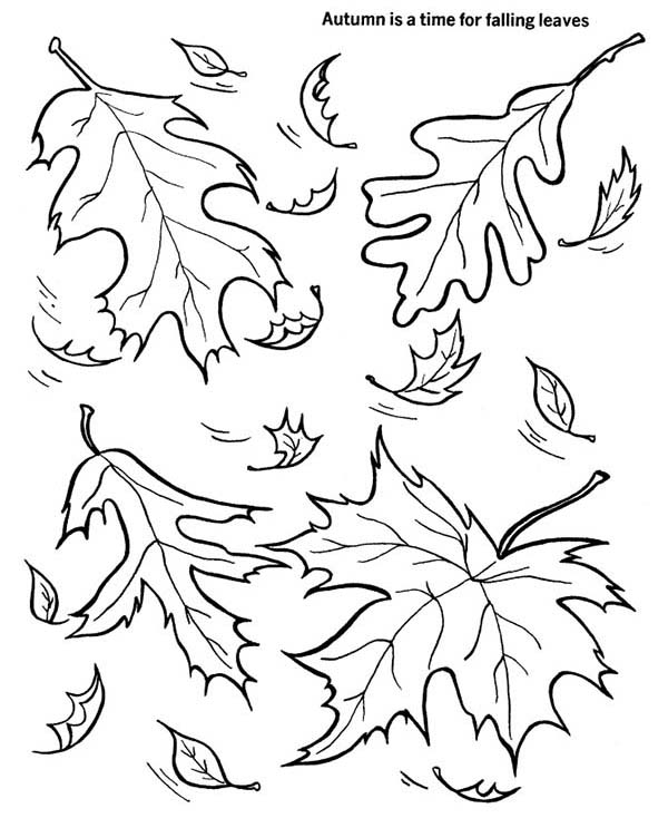 Leaves, : Autumn Falling Leaves Coloring Pages