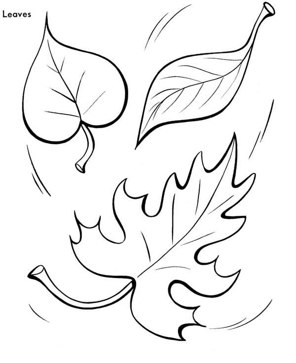 Leaves, : Autumn Leaves Coloring Pages
