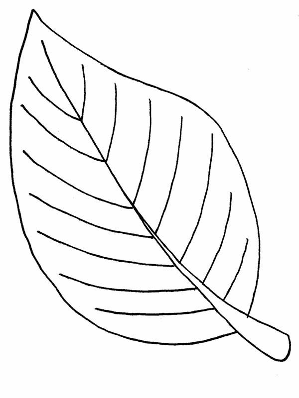 Leaves, : Autumn Leaves Coloring Pages for Kids