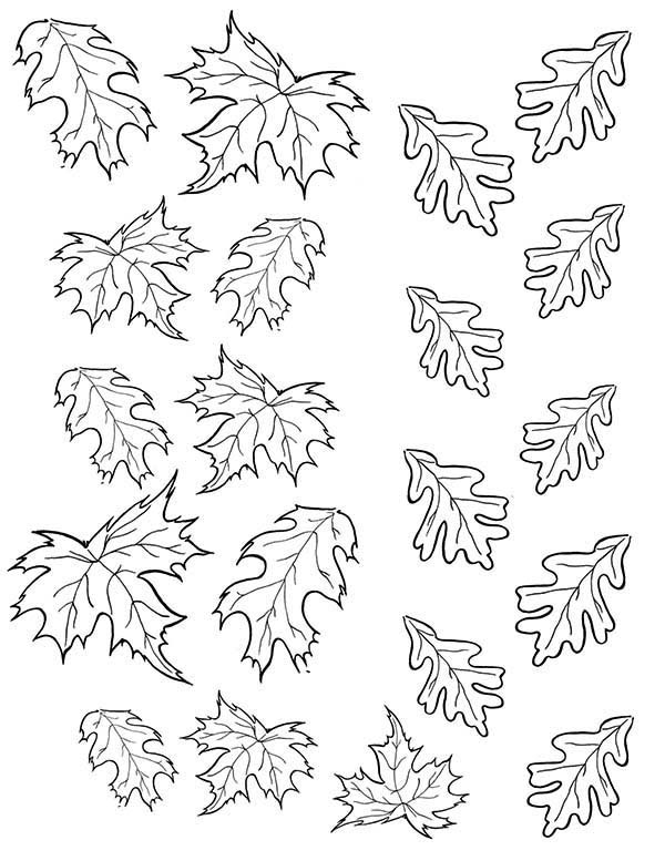 Leaves, : Autumn Leaves Picture Coloring Pages