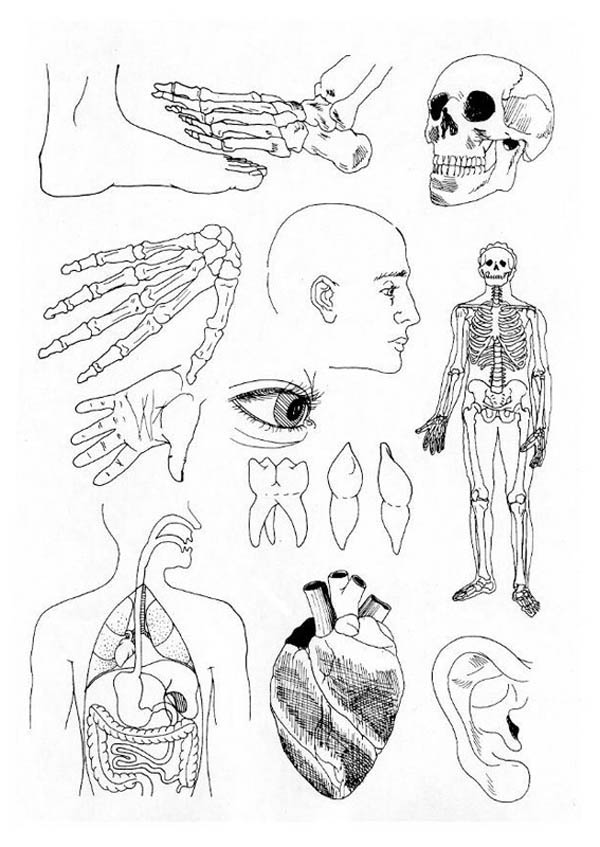 Human Anatomy, : Biology Lesson Human Anatomy Coloring Pages