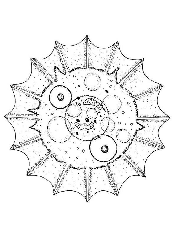 Mandala Animal, : Cell Mandala Animal Coloring Pages