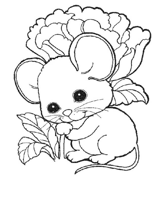 Mouse and Rat, : Cute Mouse and Rat Baby Coloring Pages