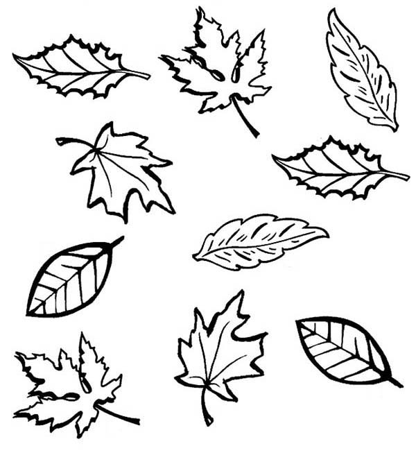 Leaves, : Dry Leaves in Fall Season Coloring Pages