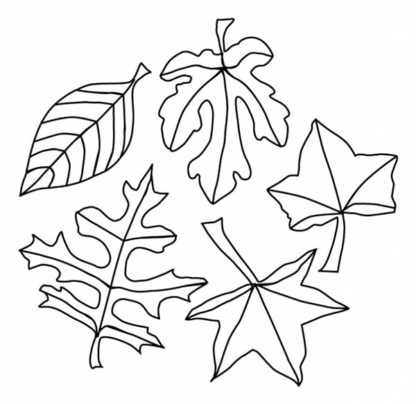 Leaves, : Fall Season Leaves Coloring Pages