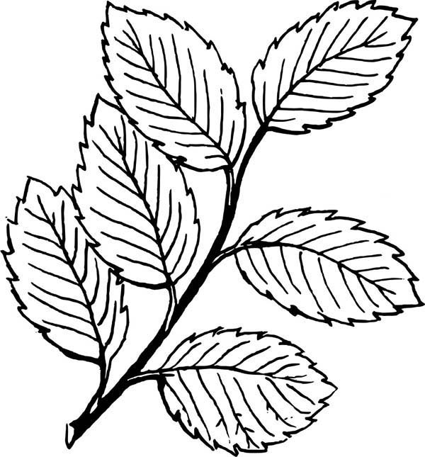 Leaves, : Falling Leaves Image Coloring Pages