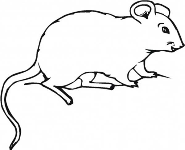 Mouse and Rat, : Fat Mouse and Rat Coloring Pages