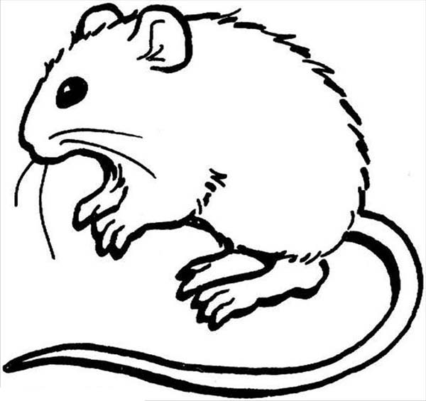 Mouse and Rat, : Hairy Mouse and Rat Coloring Pages