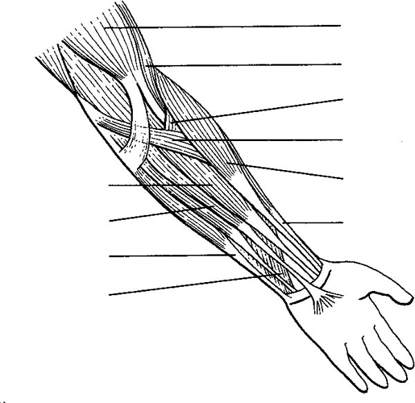 Human Anatomy, : Human Anatomy Arm Coloring Pages