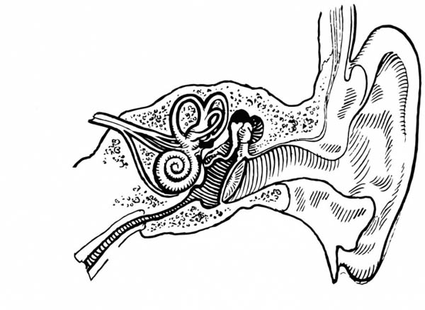 Human Anatomy, : Human Anatomy Ear Coloring Pages
