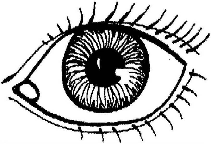 Human Anatomy Eye Coloring Pages Bulk Color