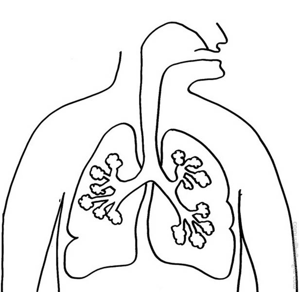Human Anatomy, : Human Anatomy Lungs Coloring Pages