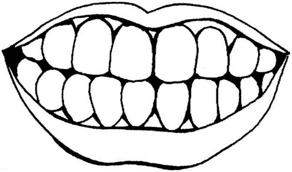 Human Anatomy, : Human Anatomy Teeth and Mouth Coloring Pages
