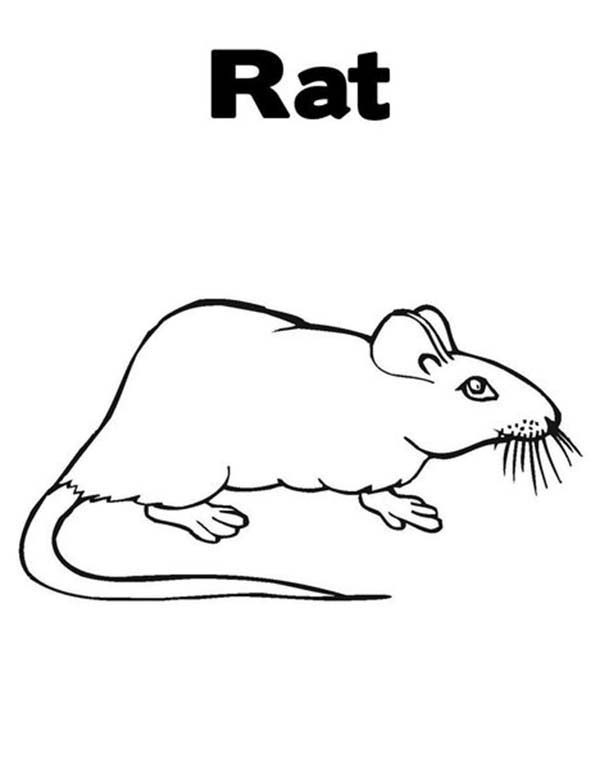 Mouse and Rat, : Learn about Mouse and Rat Coloring Pages