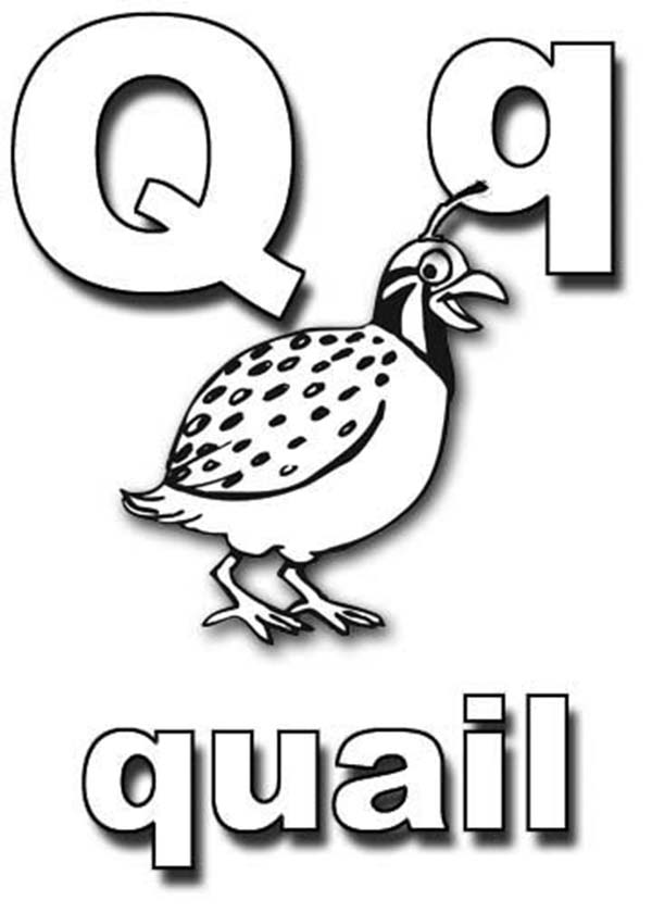 Letter Q, : Learning Letter Q Coloring Page
