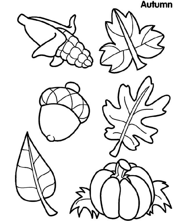 Leaves, : Leaves and Fruits Coloring Pages