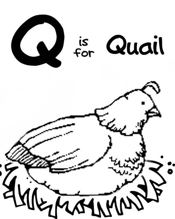 Letter Q, : Letter Q for Quail Coloring Page for Preschool Kids