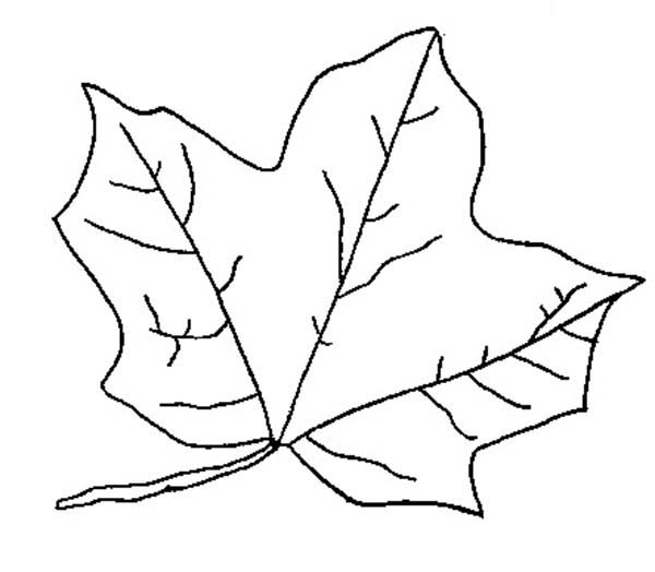Leaves, : Maple Leaves Fall in Autumn Coloring Pages