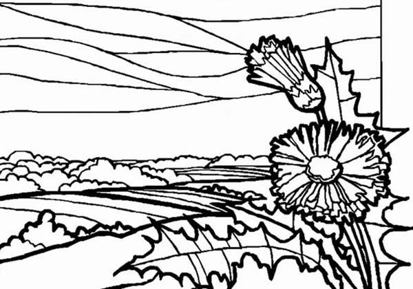 Landscapes, : Meadow Landscapes Coloring Pages