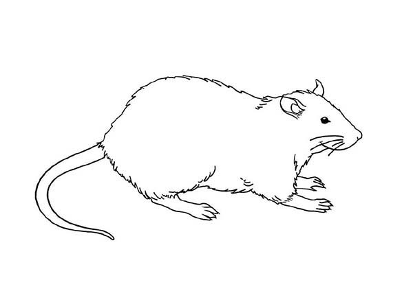 Mouse and Rat, : Mother of Mouse and Rat Coloring Pages