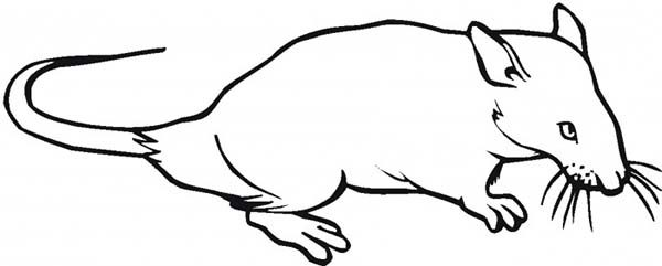 Mouse and Rat, : Mouse and Rat Coloring Pages
