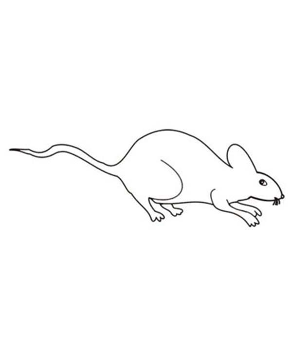 Mouse and Rat, : Mouse and Rat Outline Coloring Pages