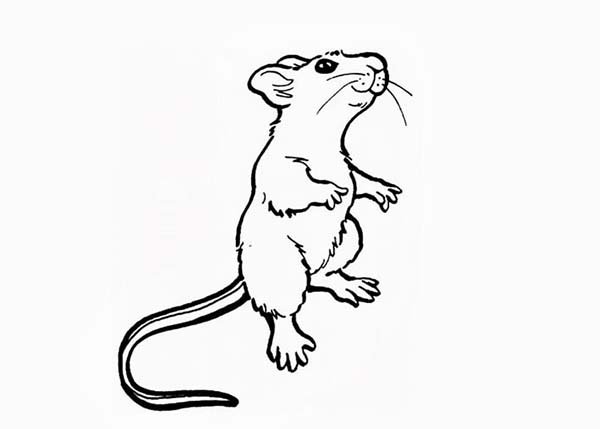 Mouse and Rat, : Mouse and Rat Standing on Two Feet Coloring Pages