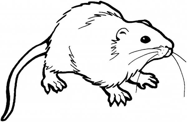 Mouse and Rat, : Mustache of Mouse and Rat Coloring Pages