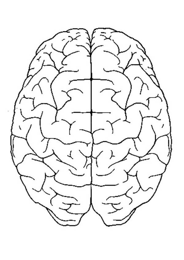 Human Anatomy, : Perfect Brain in Human Anatomy Coloring Pages