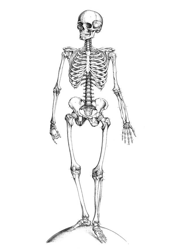 Human Anatomy, : Perfect Human Anatomy of Bones Coloring Pages
