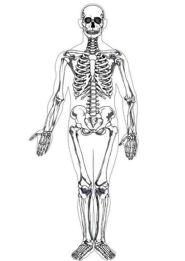 Human Anatomy, : Photo Human Skeleton in Human Anatomy Coloring Pages