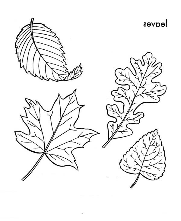 Leaves, : Picture of Falling Leaves Coloring Pages