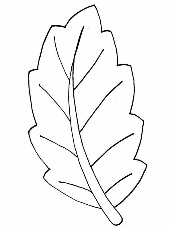 Leaves, : Pot Autumn Leaves Coloring Pages