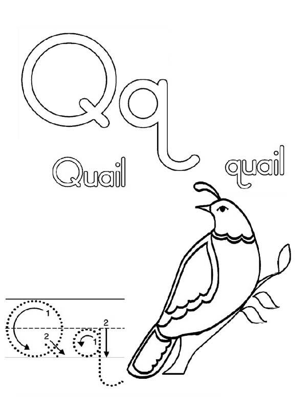 Letter Q, : Preschool Letter Q is for Quail Letter Q Coloring Page