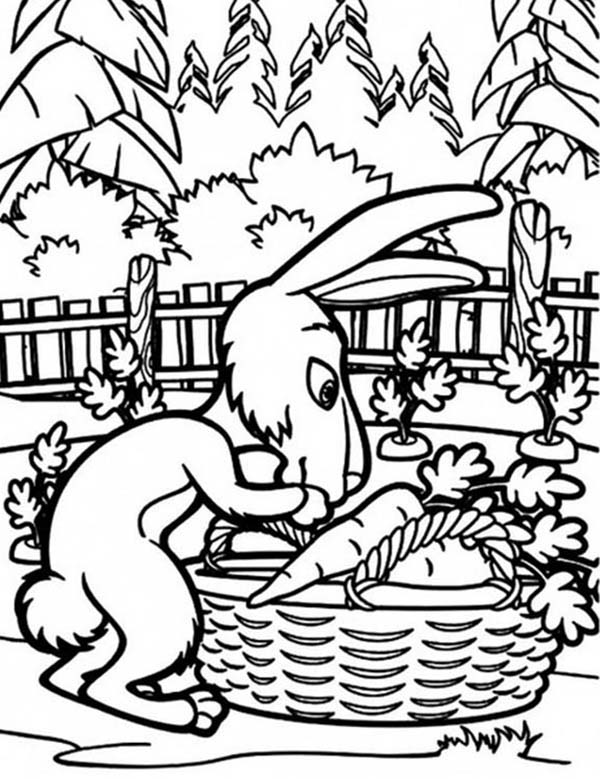 Mascha and Bear, : Rabbit Put Some Carrots in a Basket in Mascha and Bear Coloring Pages