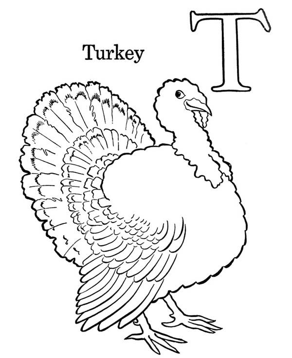 Letter T, : Turkey is for Letter T Coloring Page