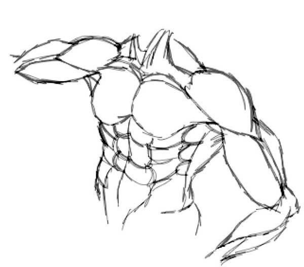 Human Anatomy, : Upper Body Human Anatomy Coloring Pages