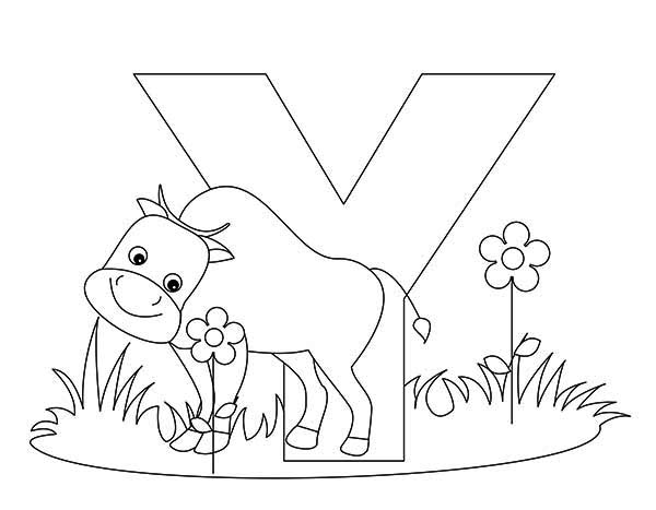 Letter Y, : Animal Alphabet Letter Y Coloring Page