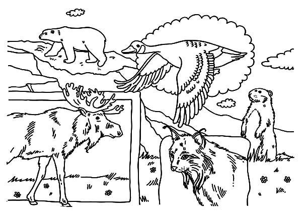Canada Day, : Bunch of Indigenous Animals on Canada Day Coloring Pages