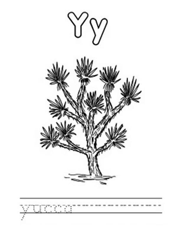 Letter Y, : Letter Y is for Yucca Coloring Page