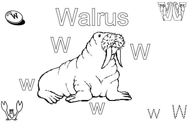 Letter W, : Preschool Learn Letter W for Walrus Coloring Page